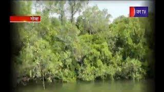 Goa के लिए पेड़ बना वरदान , बचाया सुनामी से ... जानिये कैसे ?   Goa   Miraculous tree