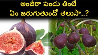 Amazing Benefits of Anjeer fruit | Top Health Tips | Uses of Anjeera Fruite | Natural Health & Cure