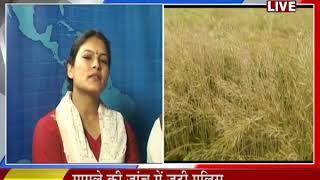 Khas Khabar   प्रदेश के किसानों पर फिर से एक बार मौसम की मार
