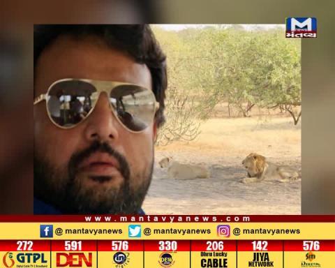 Savarkundla MLA Pratap Dudhat posts selfies with Asiatic lions | Mantavya News