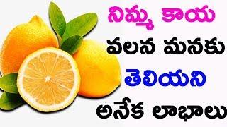 నిమ్మ కాయ వలన మనకు తెలియని అనేక లాభాలు  | Health Benefits Of Lemon |