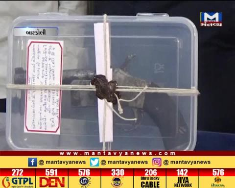 Surat: LCB Police has caught a man with 2 cartridges and Pistol | Mantavya News