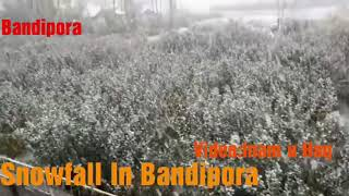 #kashmirsnows Snowfall In Bandipora,Heavy Snowfall Begins In Bandipur.(Video:Inam u Haq)
