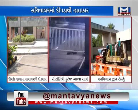 A leopard entered the New Sachivalay at Gandhinagar, search operation is on | Mantavya News