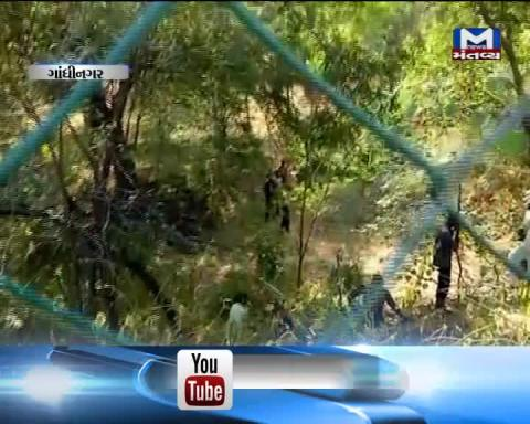 Gandhinagar:Forest Department has conducted Search operation to locate the leopard