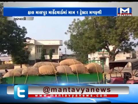 Aravalli: Registration of groundnut at MSP stopped due to shortage of Sacks in GSCSCL