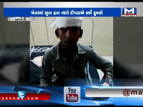 Amreli: Leopard attacked on a 16 yrs old boy | Mantavya News