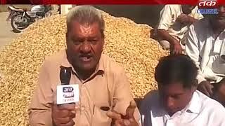 Khambha+Jamnagar+Jodiya  : Purchase of peanuts in the marketing yard