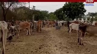 Damnagar : Narola family service activities