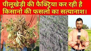 पीलूखेड़ी की फैक्ट्रियां कर रही है किसानों की फसलों का सत्यानाश ।