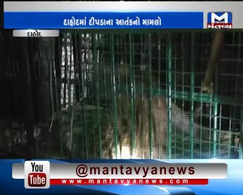 Dahod: Forest Department has caught a Leopard