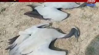 Kalyanpur : 8 birds of birds died on Ranjitpar village
