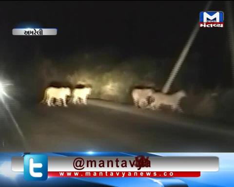 Amreli: Viral Video of Lions crossing the Road