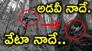 Hoia Baciu : World's Most Haunted Forest || Romania ||Top Telugu TV ||