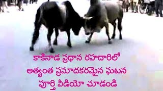 Most DANGEROUS INCIDENT AT KAKINADA Main Road See Full Video