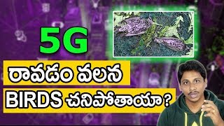 Birds Died Due To 5G Testing In Netherlands Is Real Or Fake | Telugu