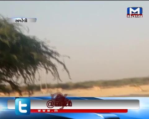 Amreli: 14 Lions was seen crossing the road
