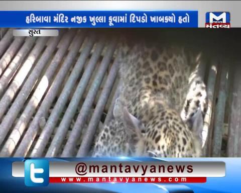 Surat: 5 months old leopard rescued in Bardoli Village