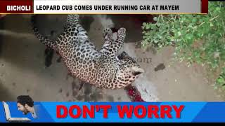 LEOPARD CUB COMES UNDER RUNNING CAR AT MAYEM