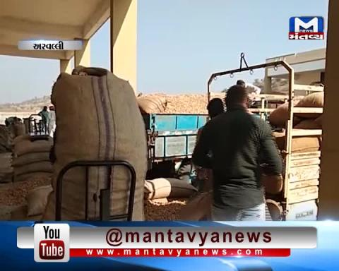 Aravalli: Farmers are happy with the Purchasing of Groundnut & Black gram at MSP