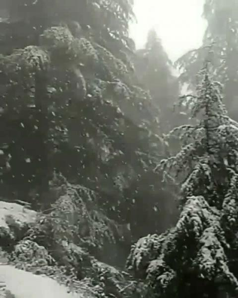 First snowfall Dharamshala - Tag you friends with whom you want to visit this snowfall - video by Archit Chanyan