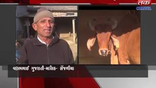 Palitana - Cow's milk giving for 10 years