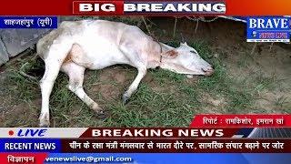 शाहजहांपुर। कटरा पुलिस ने 2 गायों सहित 3 गौतस्करों को पकड़ा - BRAVE NEWS LIVE