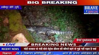 Lakhimpur Khiri: शहर में मगरमच्छ घुसने से मचा हड़कंप, लोगों मे दहशत - BRAVE NEWS LIVE
