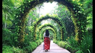 Himalayan Botanical Garden:  A Large Variety of Grasses, Plants & Herbs | Nainital, Uttarakhand