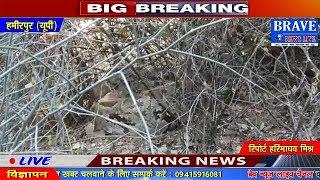 Hamirpur | गांव में अजगरों को आतंक, पुलिस आने को नहीं तैयार - BRAVE NEWS LIVE