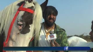 Horse Special Story Covrage By Abtak Channel