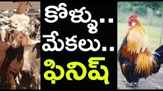 సంక్రాంతి ఎఫెక్ట్.. మాంసం షాపుల ముందు క్యూ | Sankranthi Celebrations 2019