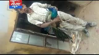 થરાદ-મોટી પાવડ ગામમાં મોરને વીજ સોટ લાગતા ઇજા