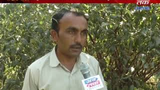 Manekvada : Farmers planted 5 varieties of bore