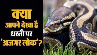 Pythons की सबसे बड़ी दुनिया... देखिए धरती पर 'अजगर लोक'