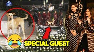 Street Dog STOPS Sidharth Malhotras RAMP WALK   Blenders Pride Fashion Tour 2018
