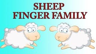 Ship Finger Family   Animal Finger Family