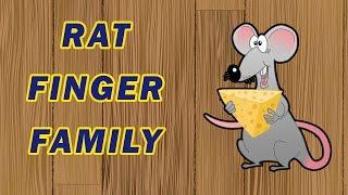 Rat Finger Family | Animal Finger Family