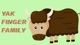 Yak Finger Family | Animal Finger Family