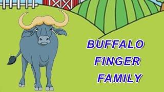 Buffalo Finger Family | Animal Finger Family