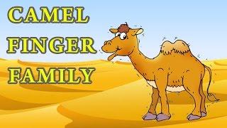 Camel Finger Family | Animal Finger Family