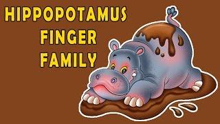 Hippopotamus Finger Family | Animal Finger Family