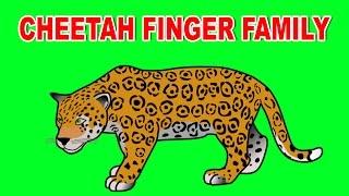 Cheetah Finger Family | Animal Finger Family