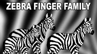 Zebra Finger Family | Animal Finger Family