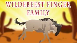 Wildebeest Finger Family | Animal Finger Family