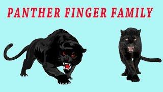Panther Finger Family | Animal Finger Family