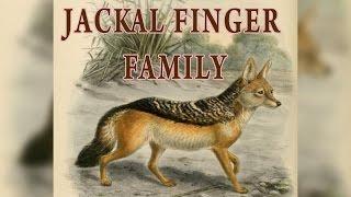 Jackal Finger Family | Animal Finger Family