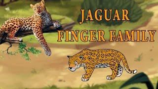 Jaguar Finger Family | Animal Finger Family