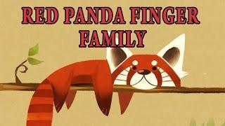 Red Panda Finger Family | Animal Finger Family
