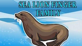 Sea Lion Finger Family | Animal Finger Family